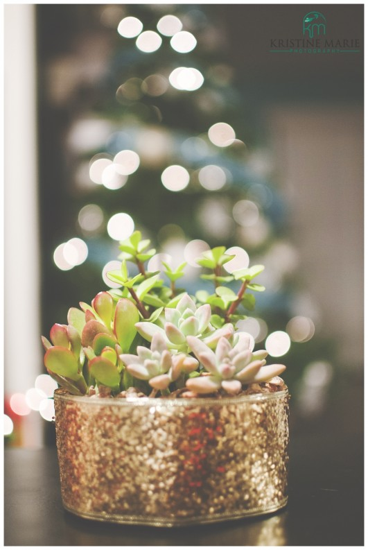 Christmas Succulent Gift Ideas.Diy Wedding Favors Sparkly Succulents Gift San Diego