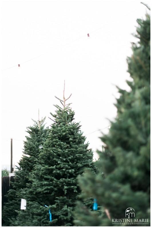 Family Christmas Tree Farm Maternity Photos | San Diego Maternity Photographer | © Kristine Marie Photography