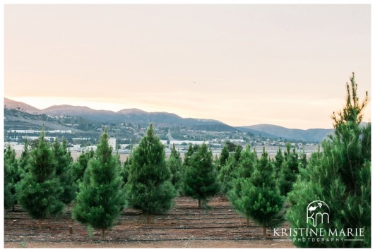 Family Christmas Tree Farm Maternity Photos | San Diego Maternity Photographer | © Kristine Marie Photography ...